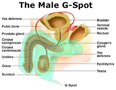 where is a guys gspot
