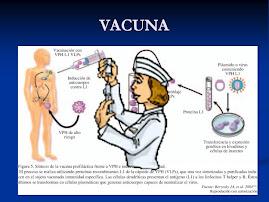 EFECTO DE LA VACUNA SOBRE EL VPH
