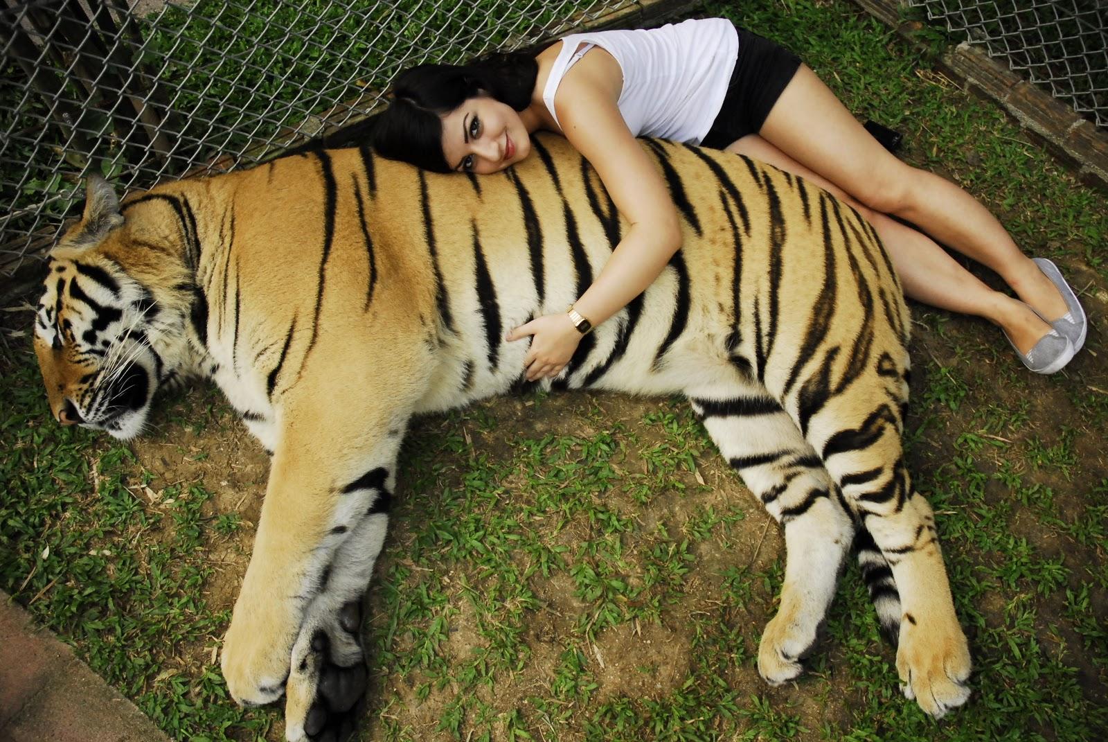 Matts Travel Blog: Tiger Kingdom, Chiang Mai