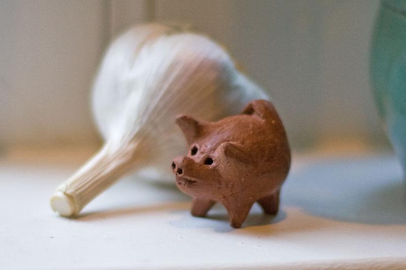 Good Luck Chilean Pig from Fern's Garden