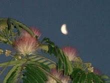 luna del solsticio