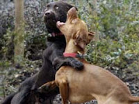 Dog fighting bad!