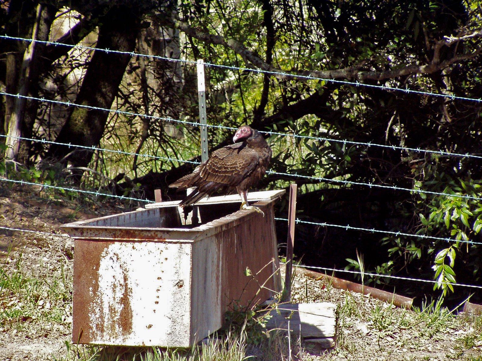 Dipper ranch vultures on the barn for Aggiunta di garage ranch rialzato