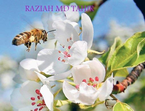 RAZIAH MD TAHIR