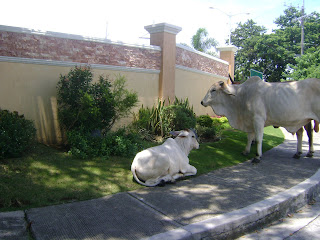 cows homes muntinlupa
