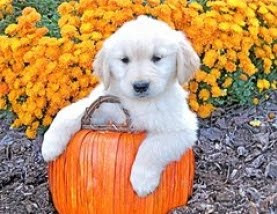 cute halloween dog