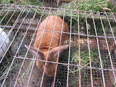 Alternativas de Alimentacion en Conejos