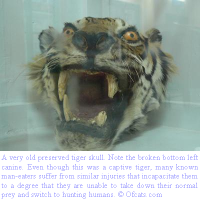 [Tiger+Skull.PNG]