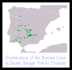 Iberian Lynx Distribution