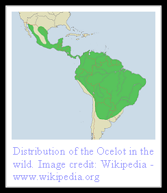 Ocelot Distribution