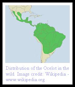 Ocelot Distribution