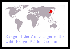 Siberian Tiger distribution