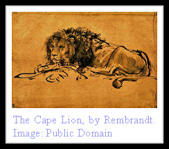 Cape Lion