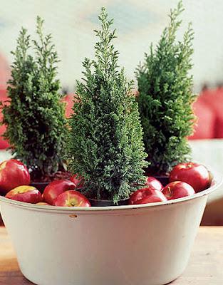 cedar tree and apple centerpiece
