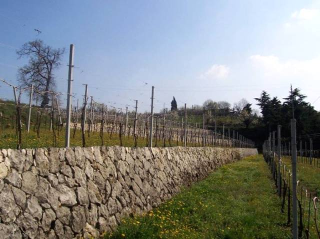 Vineyards, Valpolicella