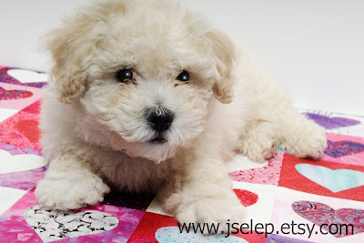 I heart faces puppy bishon teddy