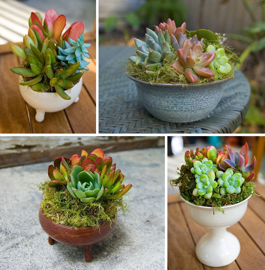 Hayfield house succulents Planters for succulents