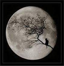 A lua e o Gato