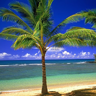 Palms, beach, sea download free wallpapers for apple iPad