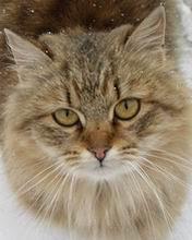 Smiješna mačka download besplatne slike pozadine za mobitele