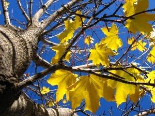 Žuto lišće, jesen download besplatne pozadine slike za mobitele