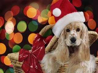 Božićne slike besplatne pozadine za mobitele download pas