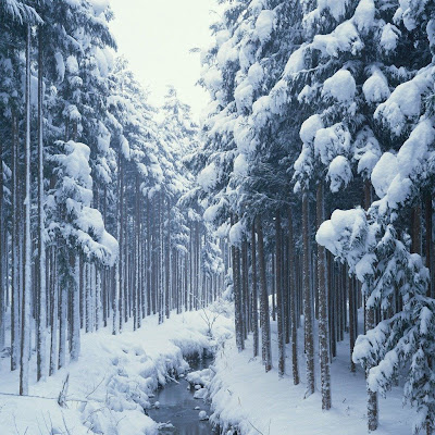 Winter, Snow, Forest, River download free wallpapers for Apple iPad
