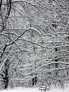 Klupa i park u snijegu, zima download besplatne pozadine slike za mobitele