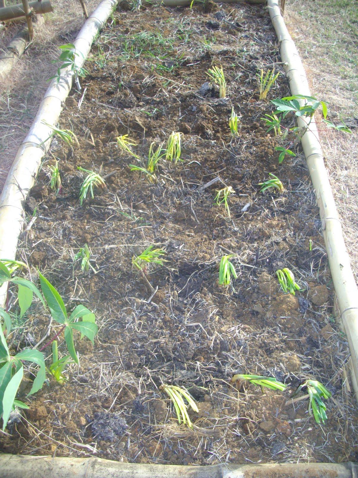 Le jardin creole plantation des epices for Jardin plantation