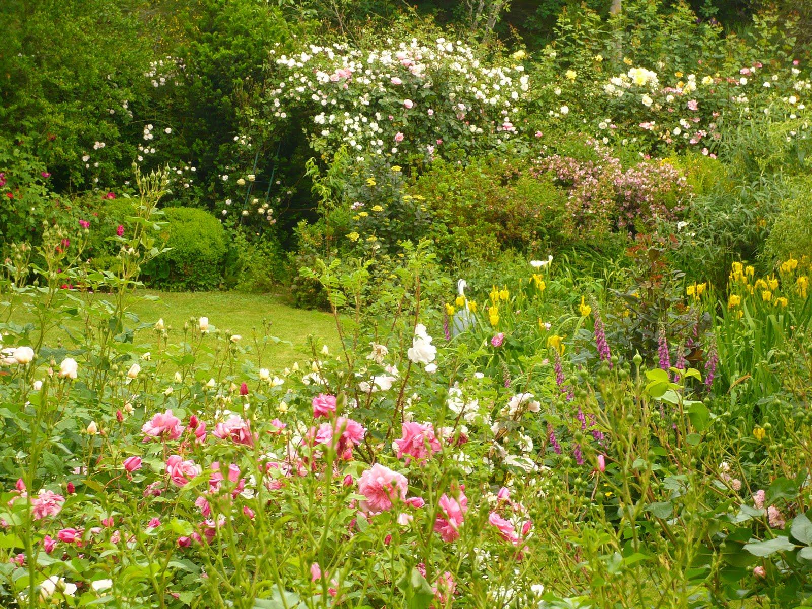 Mi jard n mi para so podar los rosales en clima lluvioso for Jardin los rosales