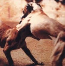 Este blog esta en contra de las peleas de perros