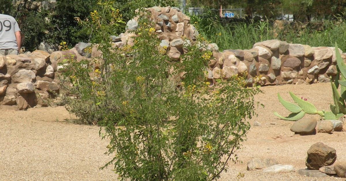 Claudia Tanzer-Photographer: Arizona desert plants