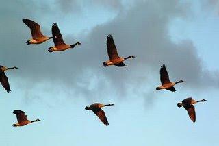 Perjuangan Hidup: Bisakah burung terbang lebih tinggi?