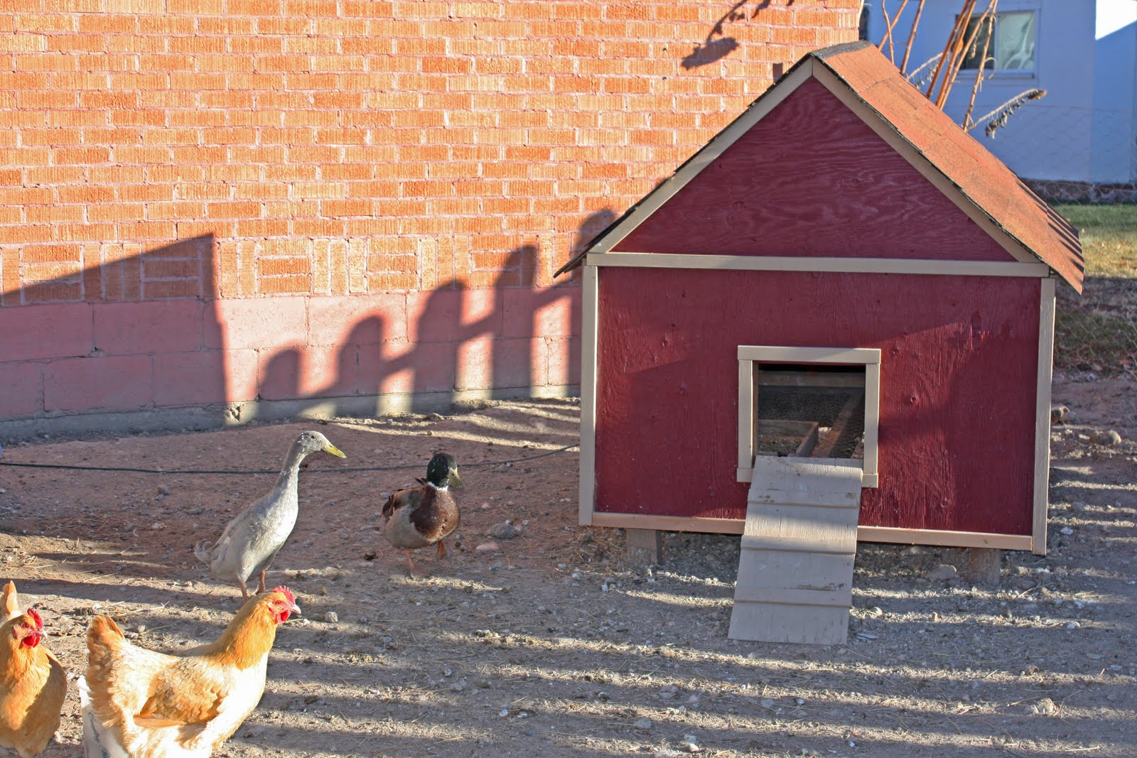 Chicken Coop Stacy Risenmay