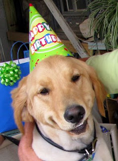 Scout looking all 'aw shucks' over the attention he's getting at his birthday party