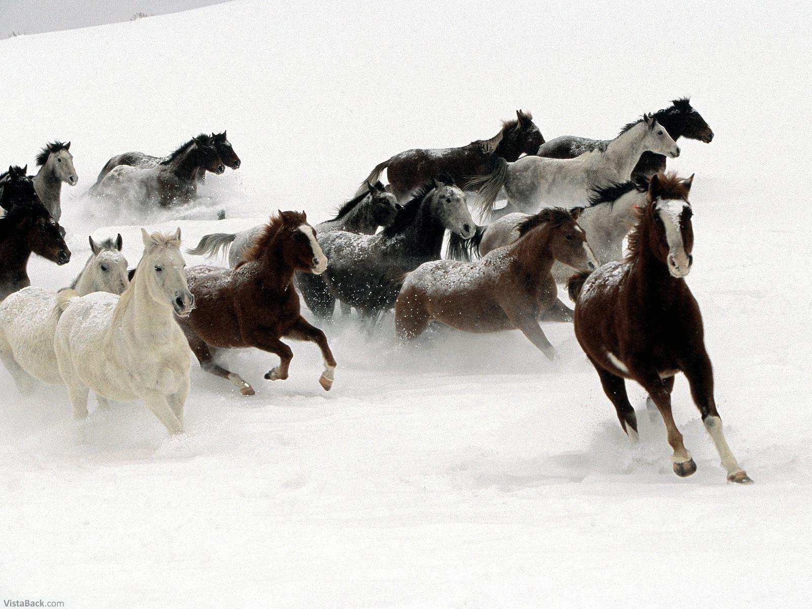 http://2.bp.blogspot.com/_9JS1XqG9_G8/SwMCz4MRUdI/AAAAAAAAAEg/MJcfYxaUKFQ/s1600/3996_Snow_Horses.jpg
