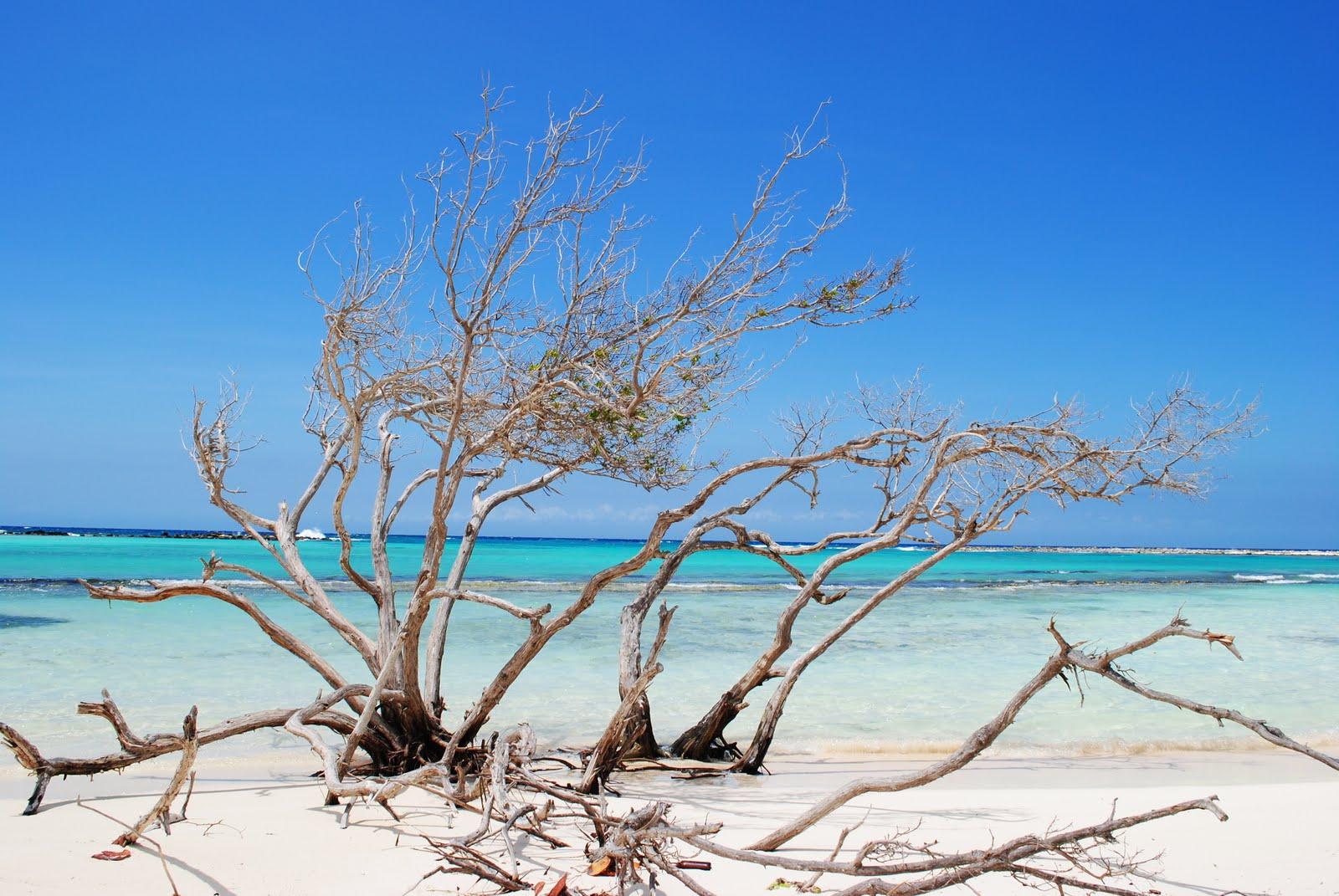 Baby Beach, Aruba.
