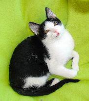 David Beckman - Adoptado!