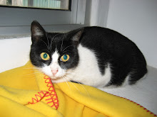 Mimi - Adoptada pela Beta!!! (Fevereiro 2010)