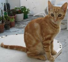 Príncipe Philippe D'Orange - Adoptado pelo Tiago!!!