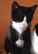 Pipoca (Ex-Batata) - Adoptada pela João e pela Inês.