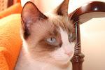 Mia (Ex-Bá) - Adoptada pela Rita!!!