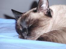 Violeta - Adoptada pela família Beringuilho!!! (Abril de 2007)