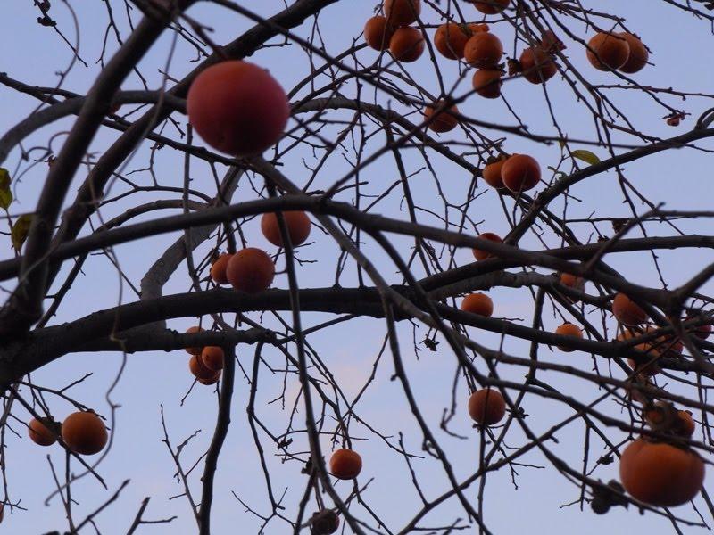 柿食えば鐘が鳴るなり法隆寺 情景