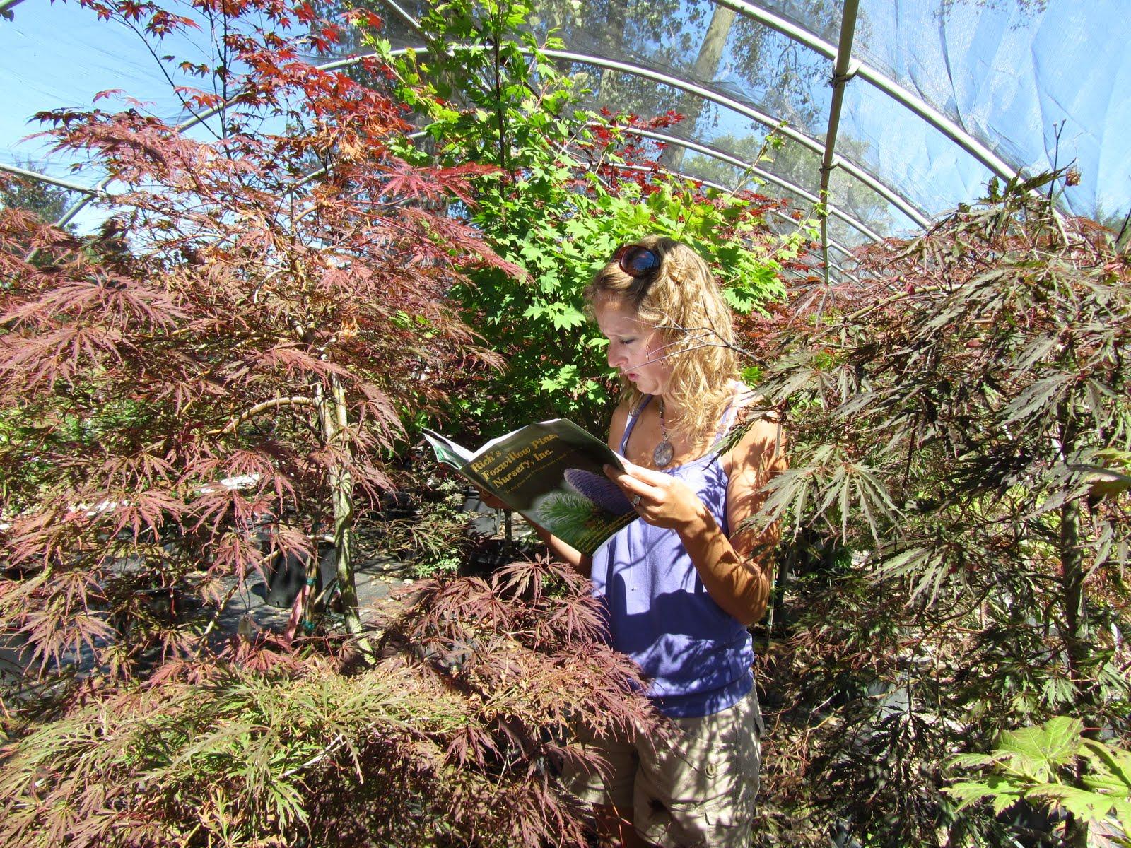 Cheesehead Gardening: August 2010