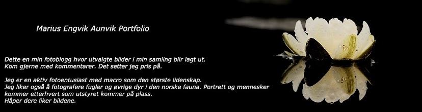 Portfolio Marius Engvik Aunvik