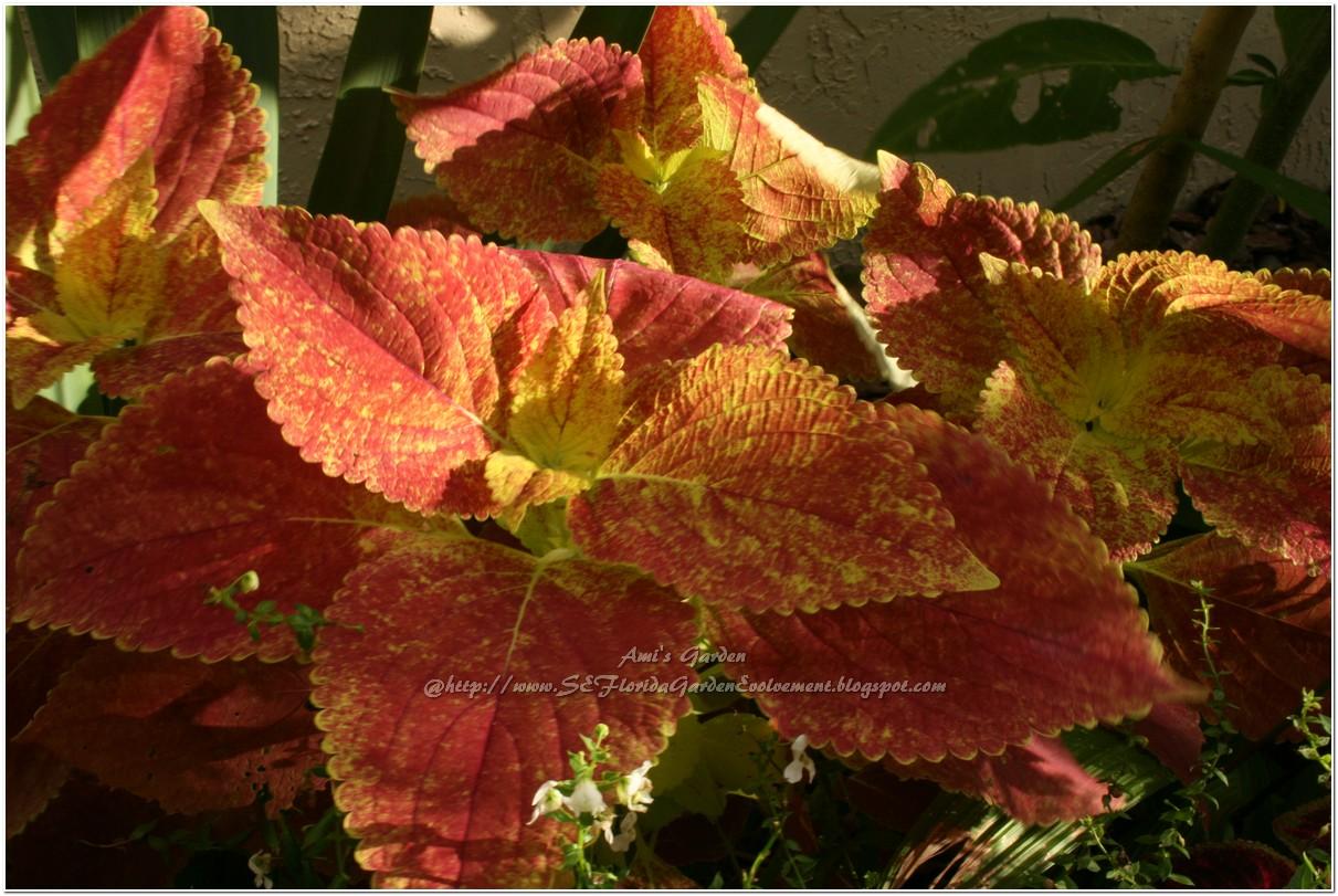 Southeast Florida Garden Evolvement: Garden Bloggers Blooming Day ...