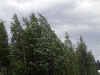 Tuulee