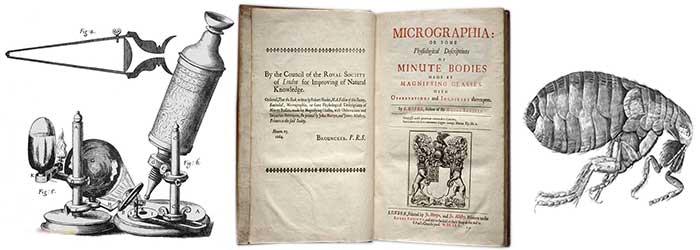 Hooke's Micrographia