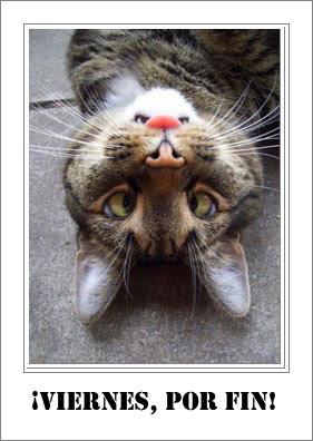 TGIF cat